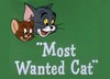 Most Wanted Cat